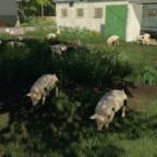 My Pigs