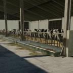 Den Kühe geht's gut